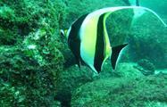 4, Buceo en Mar Caribe