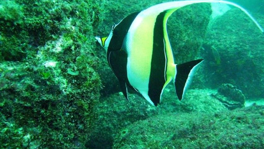 4, Dive the Caribbean