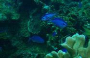 5, Portobelo Snorkeling Tour