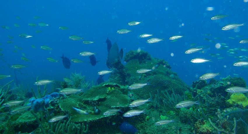 6, Portobelo Snorkeling Tour