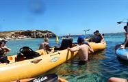 Seal and penguin island tour kayak, Seal and Penguin Island Tour