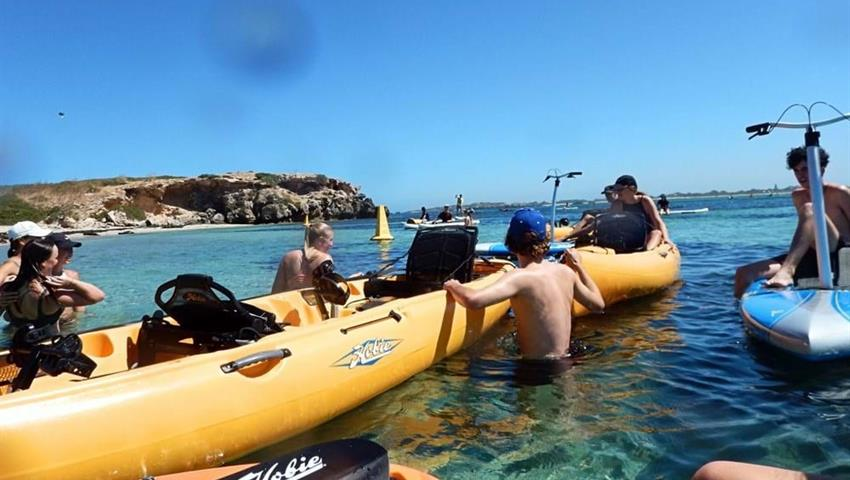 Seal and penguin island tour kayak, Tour por la Isla de Focas y Pingüinos