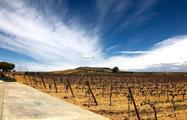 vineyard in Segovia - tiqy, Segovia with a Small Group with a Glass of Wine in Your Hand