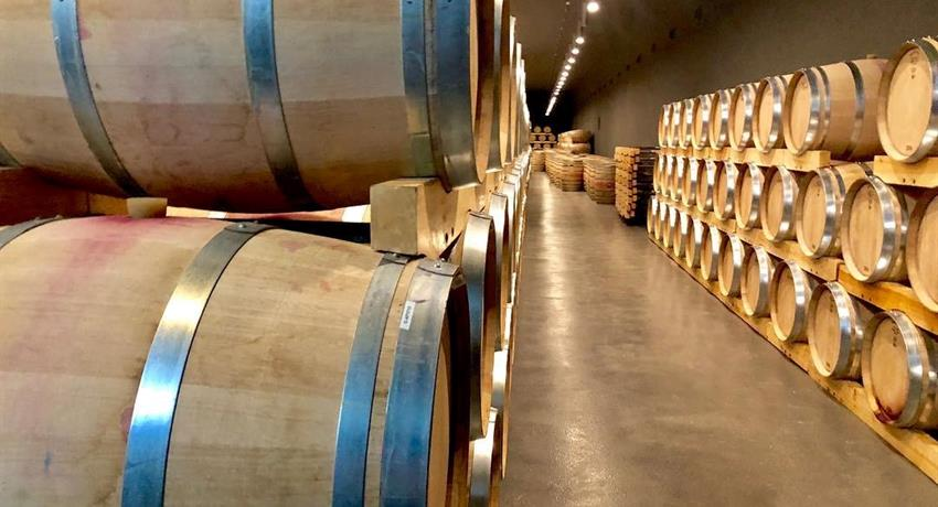 wine tour in an old winery - tiqy, Segovia with a Small Group with a Glass of Wine in Your Hand