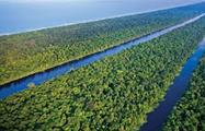 1, Tortuguero National Park One-Day Tour