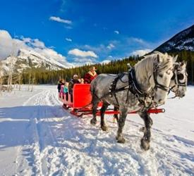Banff Sleigh Rides Tour, Sightseeing Tours in Canada
