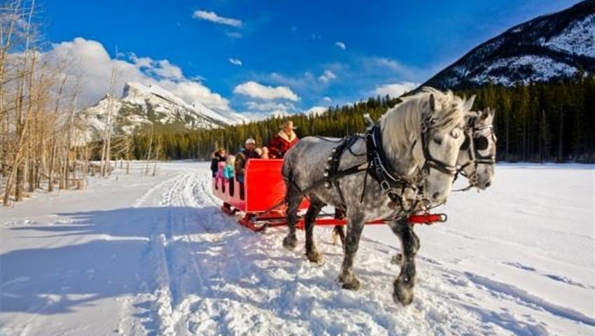 Banff Sleigh Ride, Tour Banff Paseos en Trineo