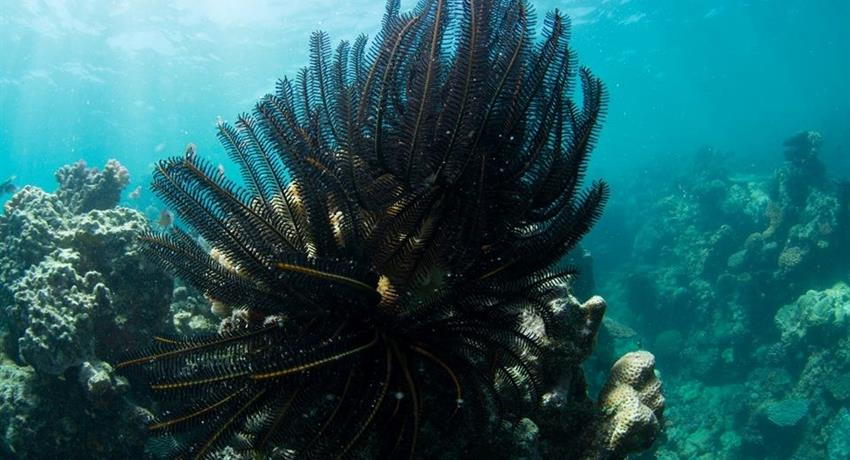 snorkeling in cairns black, Snorkel in Cairns