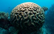 snorkeling in cairns coral brain, Snorkel in Cairns