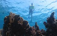 snorkel tour, Snorkeling Varadero Tour