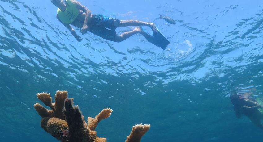 snorkeling coral beach, Snorkeling Varadero Tour