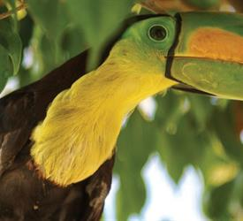 The Belize Zoo Tour, Wildlife Experiences in Belize