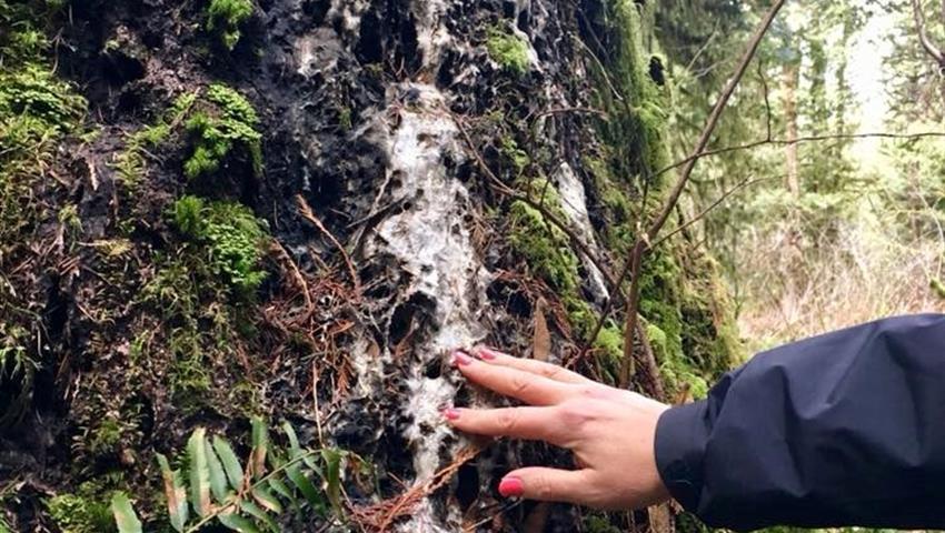 Nature adventures, Caminata Árboles Murmurantes