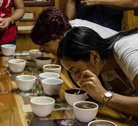 Tasting Coffee Tour