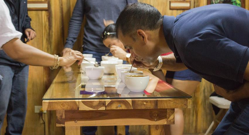 3, Tasting Coffee Tour