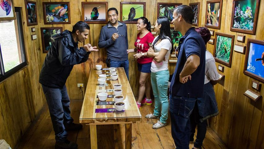 4, Tasting Coffee Tour