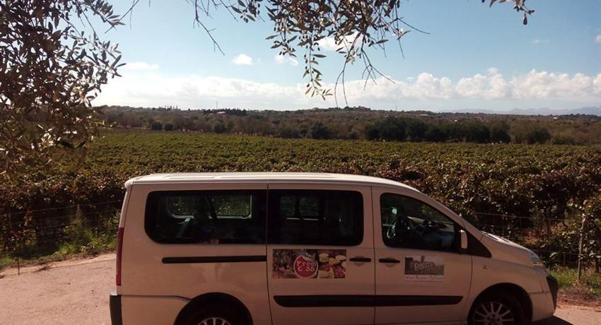 minivan wine and food tour mallorca, Degustando Vinos y Comida