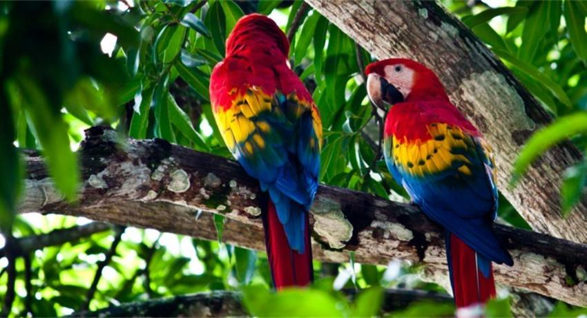 1, Carara National Park Tour