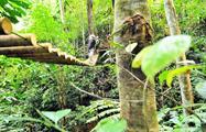 jungle adventure brigdes, Aventura en la Jungla