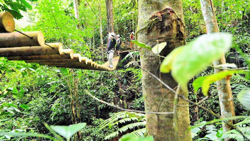 jungle adventure brigdes, The Jungle Adventure