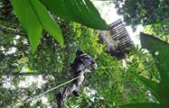 jungle adventure canopy, Aventura en la Jungla