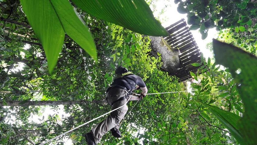 jungle adventure canopy, The Jungle Adventure