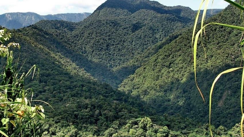view of a beautiful mountain, The Kingdom of Rainforests and Tropical Fauna