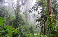 rainforest in Costa Rica, El Reino de los Bosques Lluviosos y su Fauna Tropical