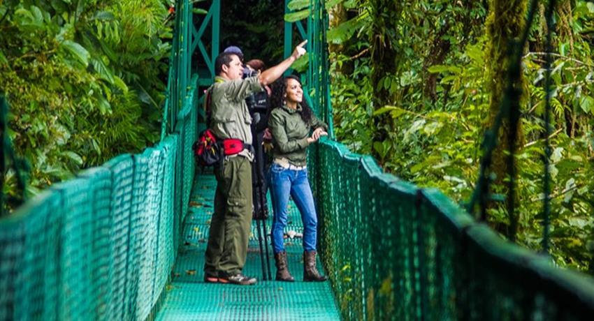 treetop walkways suspension bridges family, Treetop Walkways Suspension Bridges