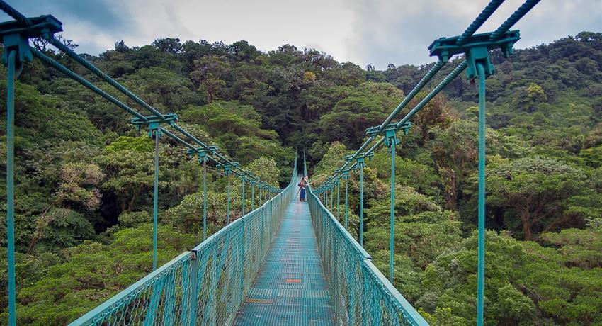 Treetop Walkways Suspension Bridges, Treetop Walkways Suspension Bridges