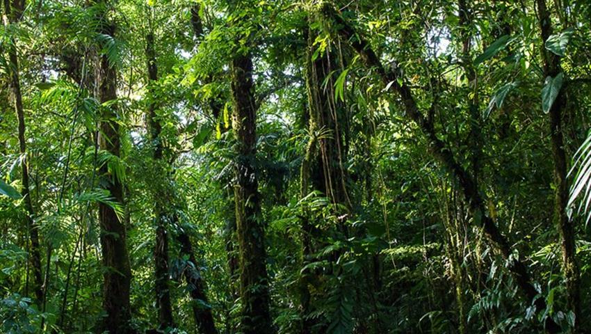 Treetop Walkways Suspension Bridges hike, Treetop Walkways Suspension Bridges