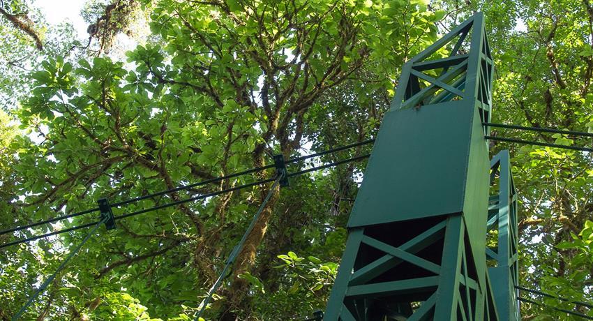 Treetop Walkways Suspension Bridges trees, Treetop Walkways Suspension Bridges