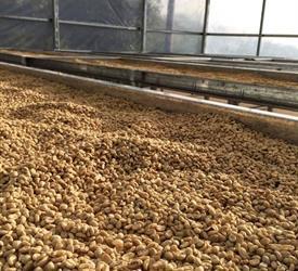Honduran Coffee Experience