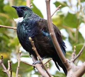 Explora la Isla Ulva, Tours En Bote en Nueva Zelanda