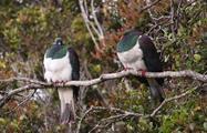 bird tiqy, Explora la Isla Ulva