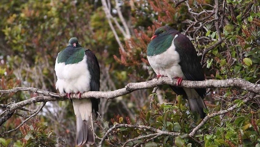 bird tiqy, Ulva Island Explorer