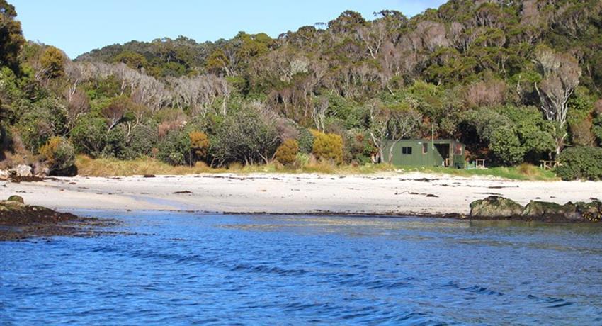 beach tiqy, Ulva Island Guided Walk