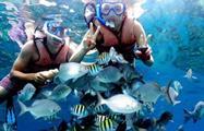 1, Hookah Snorkeling Bay of Pigs Caribbean Sea
