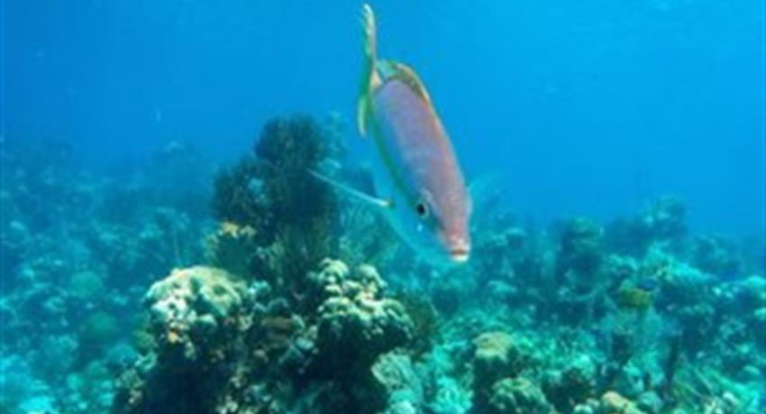 5, Hookah Snorkeling Bay of Pigs Caribbean Sea