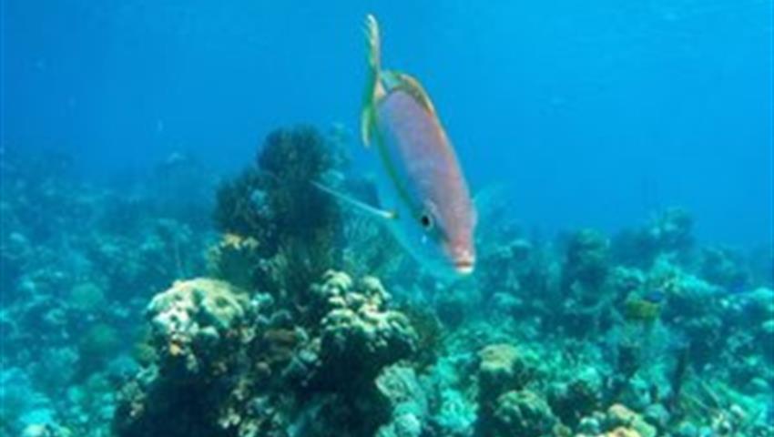 5, Hookah Snorkeling Bay of Pigs Caribbean Sea