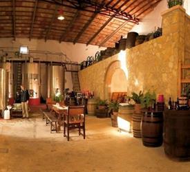 Visita a los Viñedos de Binissalem y Degustación de Vinos en Bicicleta
