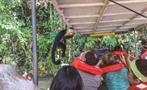 VISIT TO MONKEY ISLAND AND EMBERA 1, Visita a Isla de los Monos y a la Comunidad Emberá Katuma desde la Cuidad de Panamá