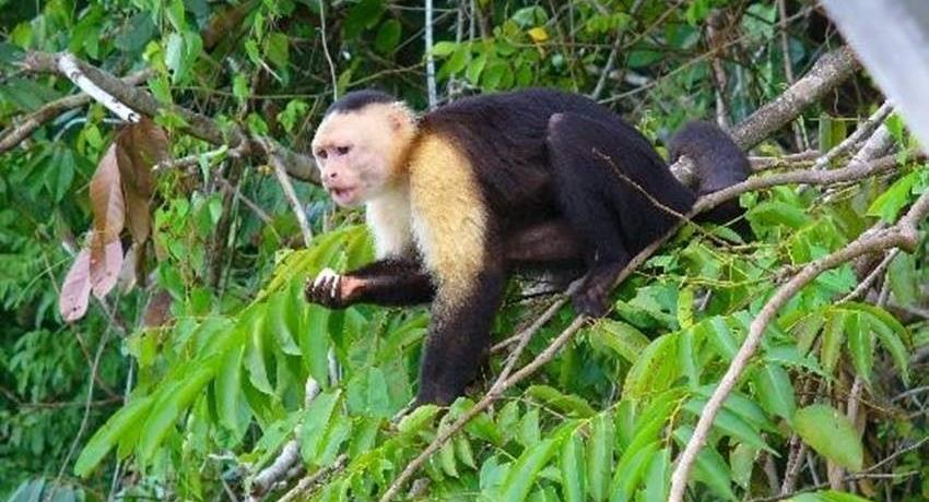 VISIT TO MONKEY ISLAND AND EMBERA 3, Visita a Isla de los Monos y a la Comunidad Emberá Katuma desde la Cuidad de Panamá