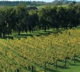 Volcanoes, Vines and Wines Tours
