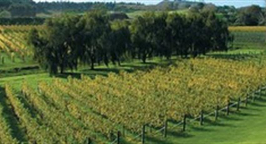 vineyard tiqy, Volcanoes, Vines and Wines Tours