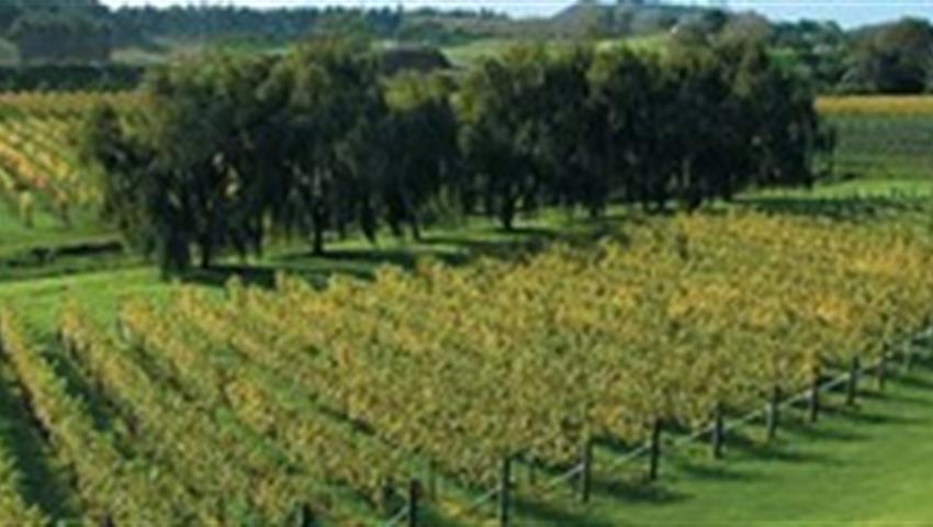 vineyard tiqy, Volcanoes, Vines and Wines Tours