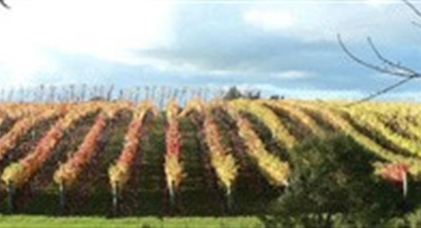 vine tiqy, Volcanoes, Vines and Wines Tours