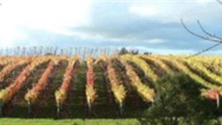vine tiqy, Volcanoes, Vines and Wines Tours