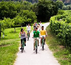 Wachau Valley Winery Bike Tour, Bike Tours  in Vienna, Austria