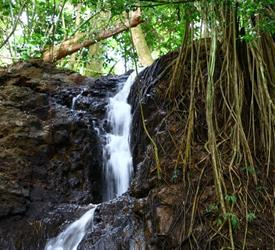 Waterfall Picnic Tour, Sightseeing Tours  in Hawaii, United States